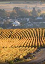 Catalogues et collections Lavinia : Retrouvez les vins du monde