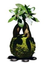 Catalogues et collections Truffaut : Découvrez l'art végétal Japonais : Kokedama