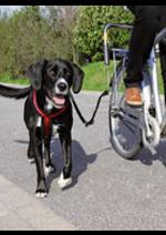 Promos et remises  : Préparez les vacances avec votre chien