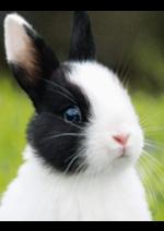 Catalogues et collections maxi zoo : Retrouvez tous les produits proposés pour votre animal