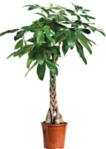 Catalogues et collections Botanic : Adoptez une plante verte