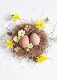 Catalogues et collections Festi : Tous les accessoires pour la chasse aux œufs