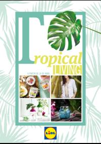 Folhetos Lidl Coruche : Tropical living