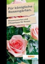 Prospectus Coop Brico+Loisirs : Für königliche Rosengärten